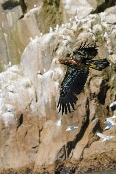 Photograph - Flight Of The Intruder by Emily Bristor