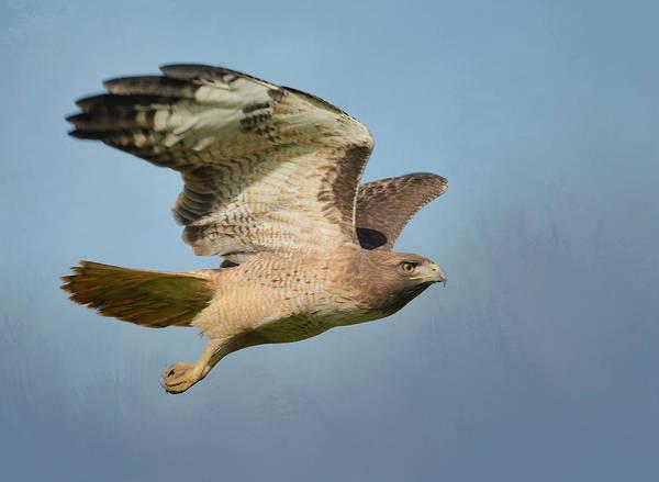 Photograph - Flight Of The Raptor 2 by Fraida Gutovich