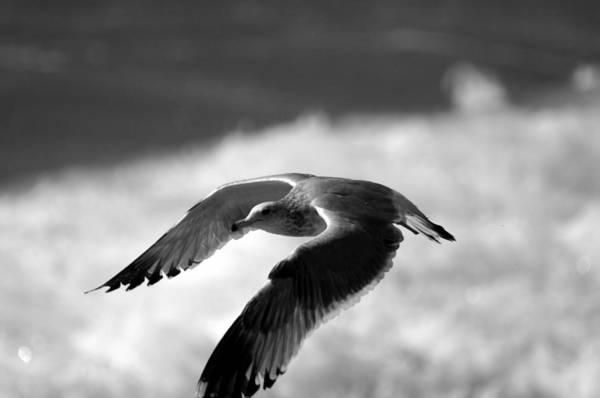 Photograph - Flight Of The Seagull by Brad Scott