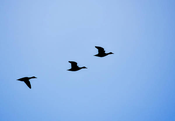 Photograph - Flight Of Three by Robert Mitchell