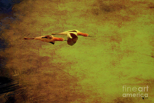 Photograph - Flight Of Two American Avocets . Texture . 40d5412 by Wingsdomain Art and Photography