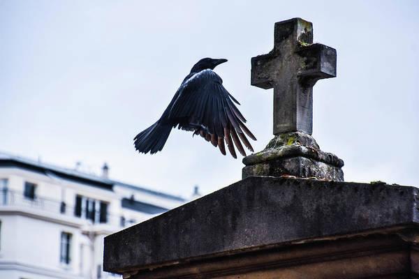 The Undead Photograph - Flight To Peace by Jon Jon