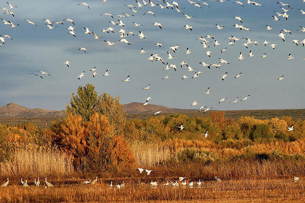 Photograph - Flight Wonders by Leda Robertson