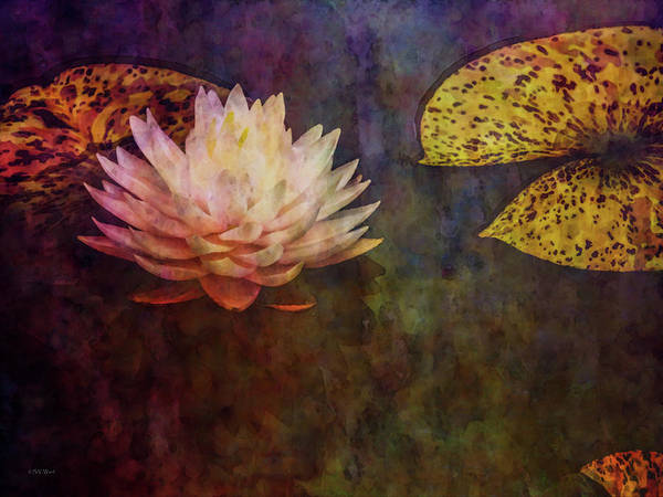 Photograph - Floating 4146 Idp_2 by Steven Ward