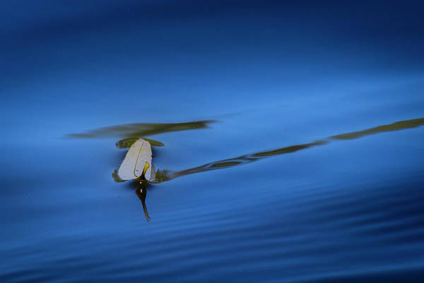 Photograph - Floating by Allin Sorenson