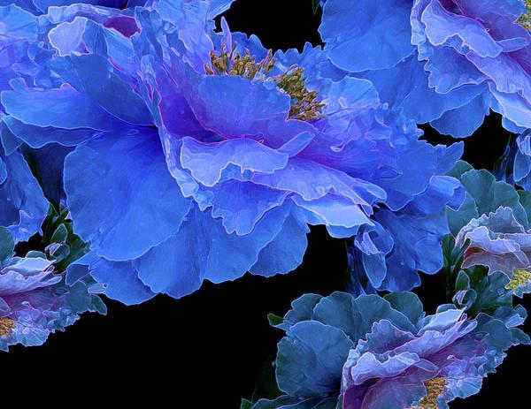 Photograph - Floating Bouquet 10 by Lynda Lehmann