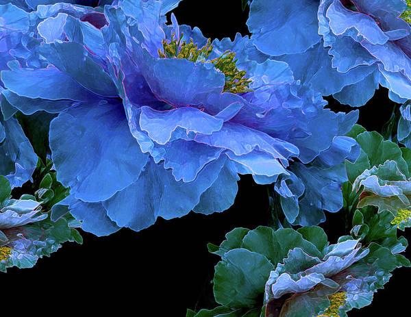 Digital Art - Floating Bouquet 14 by Lynda Lehmann