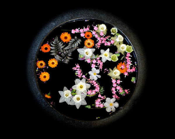 Wall Art - Photograph - Floating Bouquet by Don Schroder
