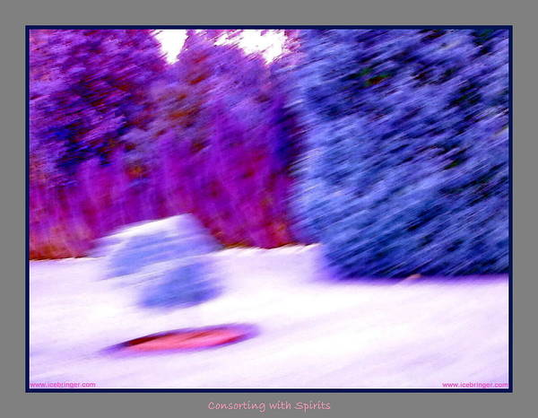 Wall Art - Photograph - Floating Bush With Shadow  by Jane Tripp