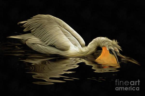Wall Art - Digital Art - Floating Dalmatian Pelican by Michal Boubin