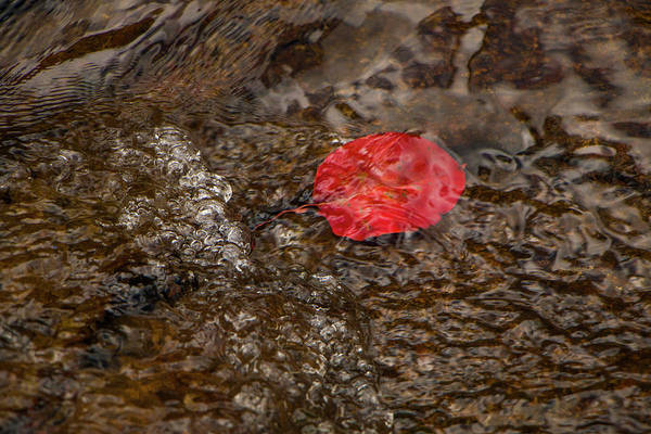 Photograph - Floating Downstream by Teresa Wilson