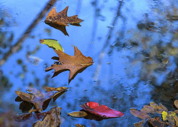 Photograph - Floating Foliage by Robert Potts