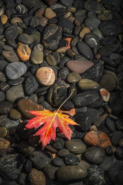Wall Art - Photograph - Floating Leaf by Steve Gadomski
