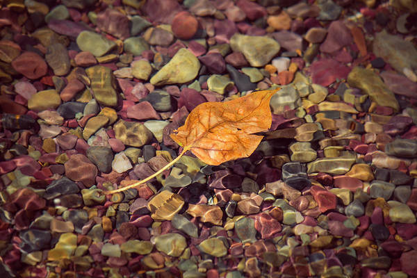 Photograph - Floating Leaf by Teresa Wilson