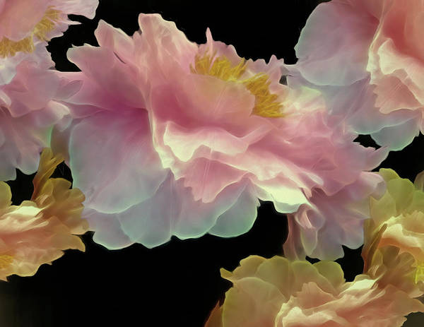 Mixed Media - Floating Peony Cluster 8 by Lynda Lehmann
