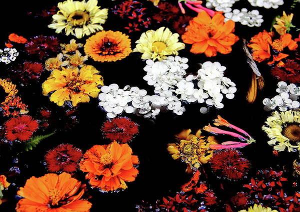 Photograph - Floating Petals by Allen Nice-Webb