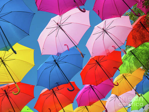 Photograph - Floating Umbrellas by Robin Zygelman