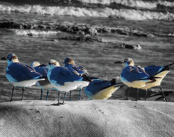Photograph - Flock Of Birds On A Beach by Coleman Mattingly