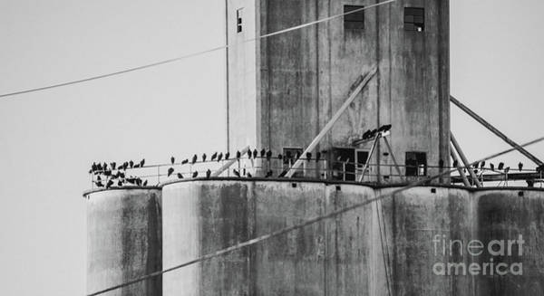 Photograph - Flock Of Blackbirds by Andrea Anderegg