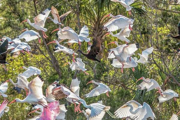 Photograph - Flock Of Mixed Birds Taking Off by Dorothy Cunningham