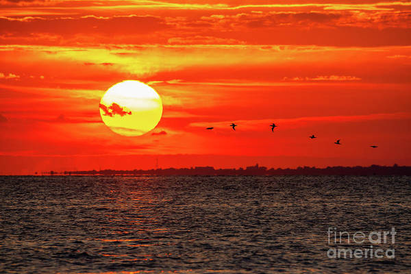 Fire In The Sky Wall Art - Photograph - Flock Of Seagulls  by Michael Ver Sprill