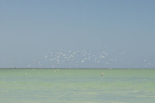 Wall Art - Photograph - Flock Of Shore Birds Flying Over Ocean by Stephanie McDowell