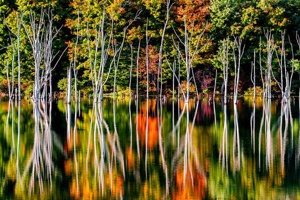 Photograph - Flood by Mihai Andritoiu