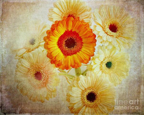 Photograph - Flora Artistica No.01 by Edmund Nagele