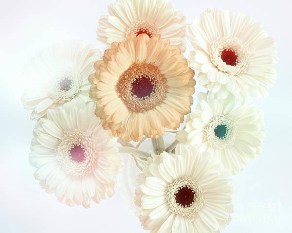 Photograph - Flora Artistica No.02 by Edmund Nagele
