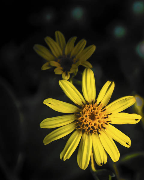 Photograph - Flora In Yellow by Chris Coffee