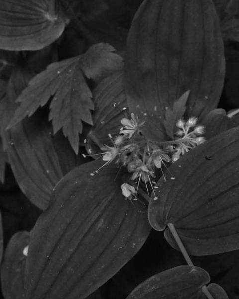 Photograph - Flora Of Natures Forest by Charles Lucas
