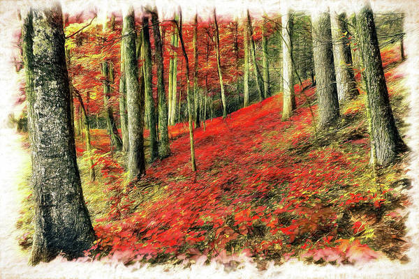 Wall Art - Painting - Flora On The Forest Floor In The Blue Ridge Ap by Dan Carmichael