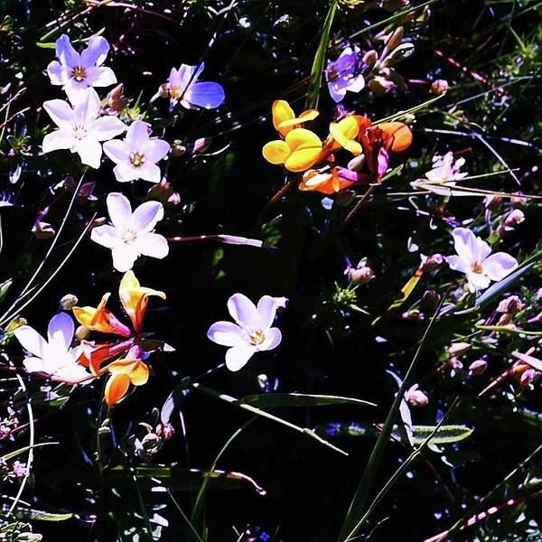 Photograph - Flora Play by HweeYen Ong