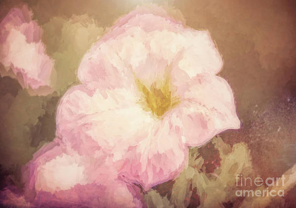 Photograph - Floral 18 by Andrea Anderegg