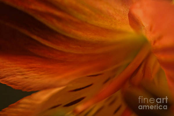 Photograph - Floral Abstract by Kelly Holm