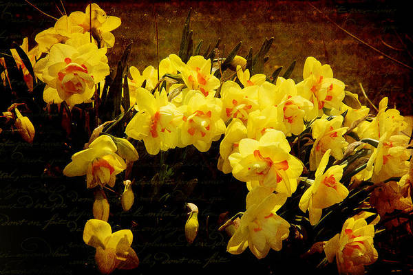 Photograph - Floral Art In Yellow by Milena Ilieva