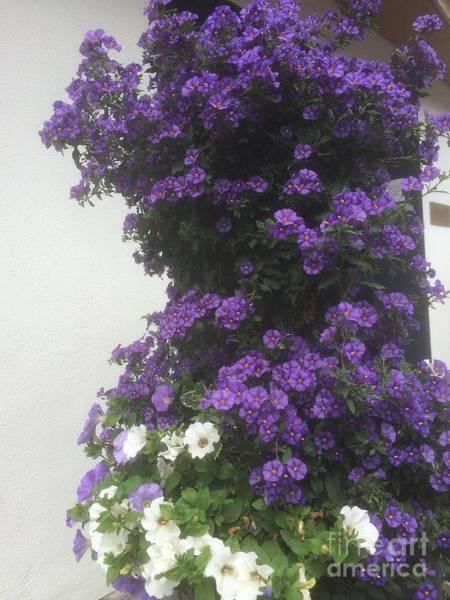 Wall Art - Photograph - Floral Beauties 26 by Angelika Heidemann