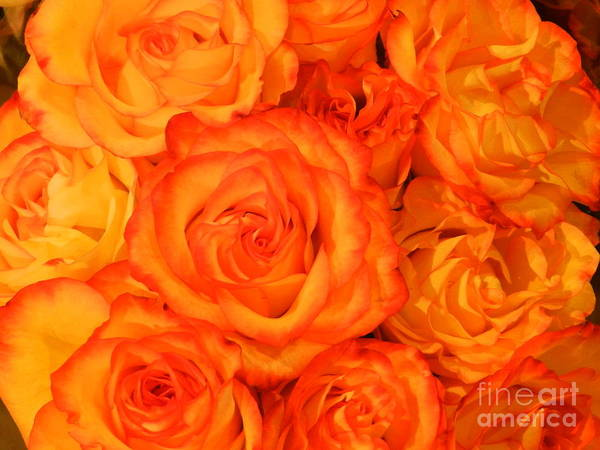Wall Art - Photograph - Floral Beauty by Snapshot Studio
