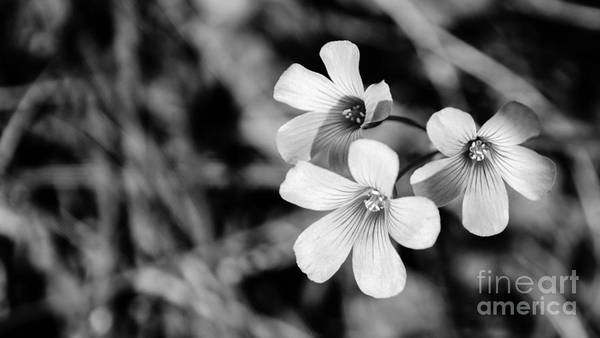 Photograph - Floral Black And White by Andrea Anderegg