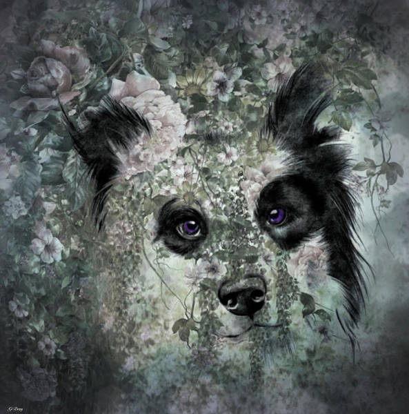 Border Mixed Media - Floral Border Collie by G Berry