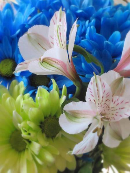 Photograph - Floral Bouquet 1 by Anita Burgermeister