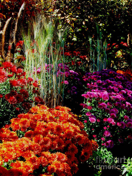 Photograph - Floral Display by Allen Nice-Webb