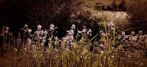 Digital Art - Floral Drama by Susan Kinney