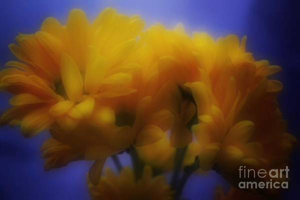 Wall Art - Photograph - Floral Dreams by Luther Fine Art