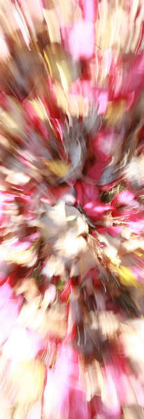 Photograph - Floral Explosion No1 by David Coblitz