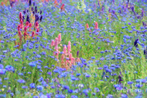 Photograph - Floral Field by Tim Gainey