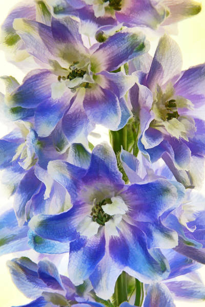 Photograph - Floral Finery Painted by Leda Robertson