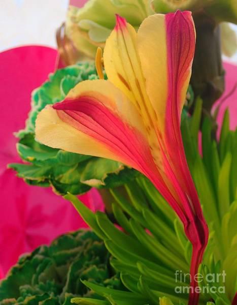 Photograph - Floral Fusion by Christina Verdgeline