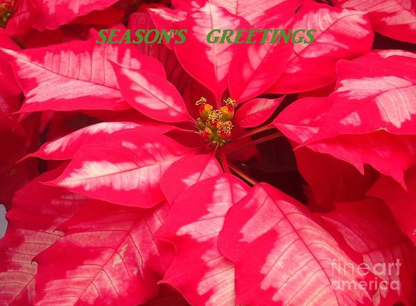 Photograph - Floral Greetings by Christina Verdgeline