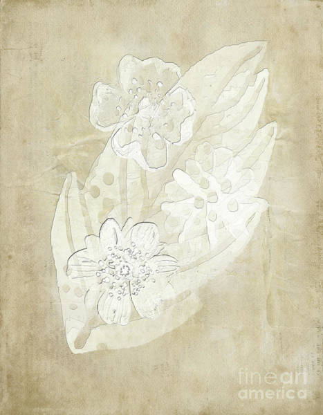 Digital Art - Floral Imprints by Judy Hall-Folde